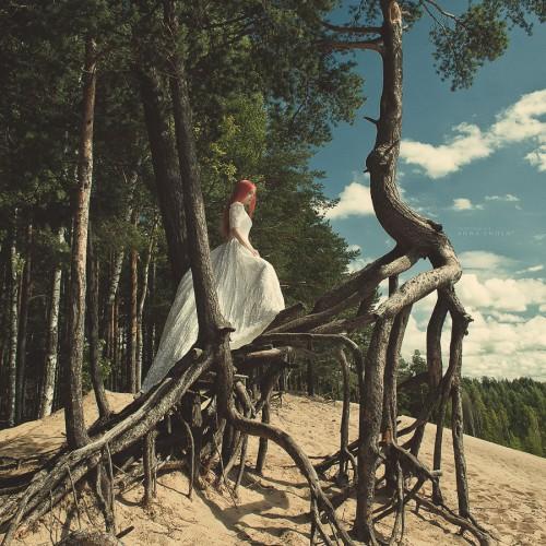 Шагающие деревья Дали. Ленинградская область, 2011